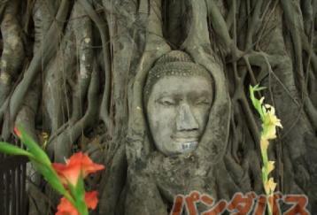 世界遺産アユタヤ巡り!5つの寺院を回る大満足ツアー!
