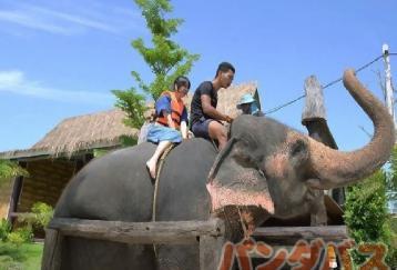 象と水浴び&水上マーケット散策(食事なし)