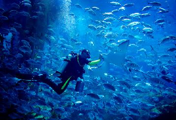 【入場チケット】ドバイ水族館(Dubai Aquarium)&水中動物園(Underwater Zoo )!
