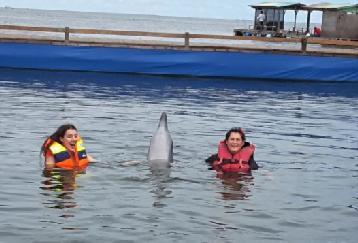 かなりの大人気!!イルカと泳ぐ♪♪ドルフィンロッジ(Swimming)